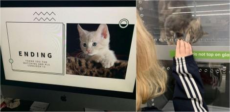 Garota cria apresentação em PowerPoint para convencer pai a adotar um gato