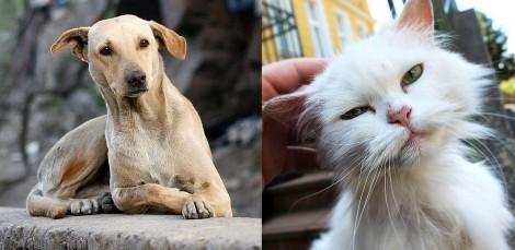 Vitória da causa animal: Senado aprova aumento de pena para casos de maus-tratos de cães e gatos