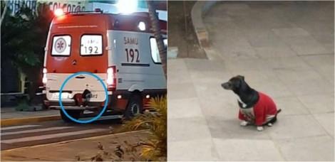 Cadela invade ambulância para ver como estava o seu dono e emociona a todos, veja o vídeo