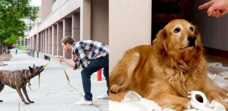 11 hábitos humanos prejudiciais à saúde física e mental dos cachorros