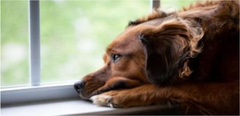 10 sinais que o seu cão demonstra que podem indicar depressão