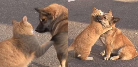 Após ser abandonado pelos donos, cão recebe abraço de consolo de gato de rua