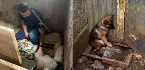 Policiais desmantelam criadouro clandestino e resgatam mais de 200 animais no PR