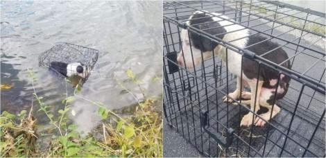 Homem resgata cachorrinha presa em gaiola flutuando em lago e decide adotá-la