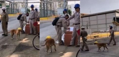 Cãozinho que visitava obra é adotado pelos trabalhadores e vira mascote oficial da empresa; confira