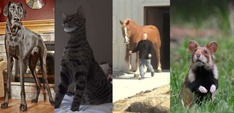 Livro dos Recordes 'Pet': estes são o maior cão, gato, cavalo e hamster do mundo