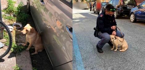 Policial resgata cadela amarrada em poste e, apaixonado por ela, decide adotá-la
