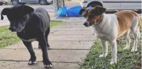 Moradores de cidade gaúcha ficam indignados após prefeitura separar cães comunitários; vídeo
