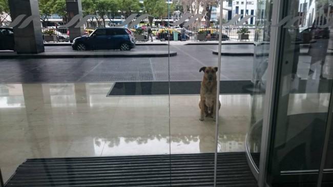 Rubio esperando por Olivia na porta do hotel