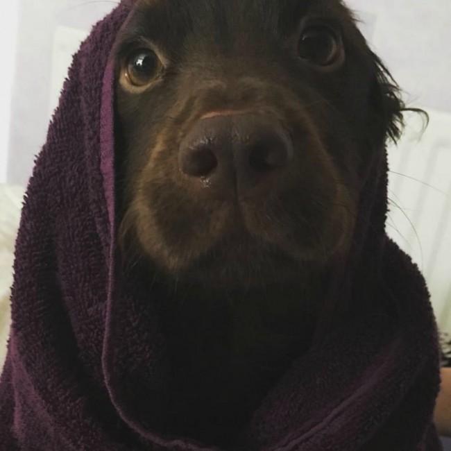 Não me dê banhos, dê abraços.