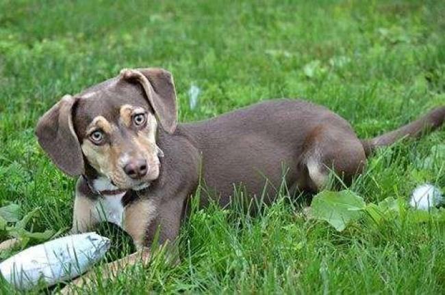 Foto: Delta Animal Shelter / Reprodução