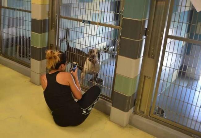 Riverside County Animal Services / Reprodução