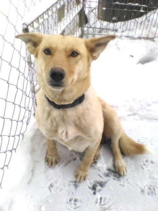 Pet Projects Rescue / Reprodução