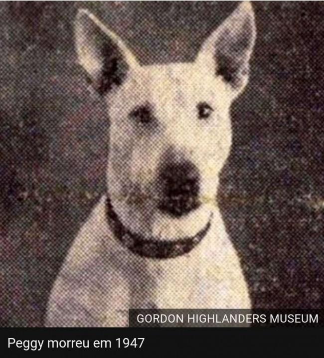 Foto: PDSA / Gordon Highlanders Museum
