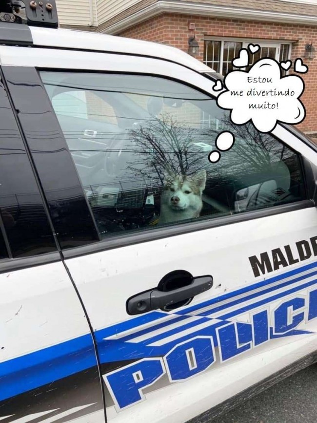Foto: Malden Police Department / Amanda Yanovitch