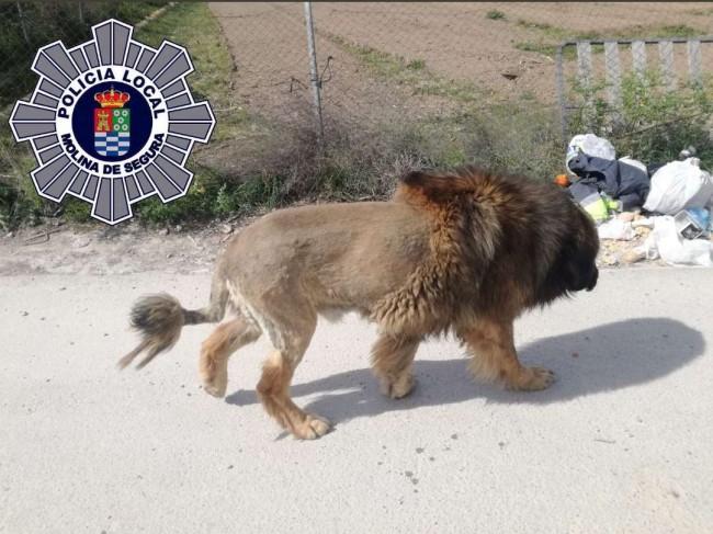 Foto: Polícia Local de Molina de Segura/Twitter