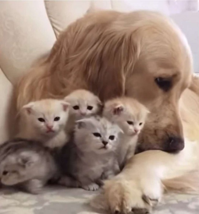 Foto: Reprodução Youtube/Viral paws