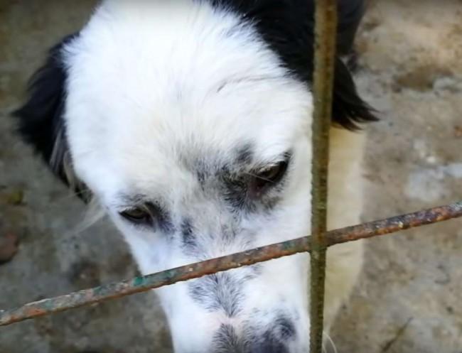 Foto: Reprodução Youtube/ Howl Of A Dog