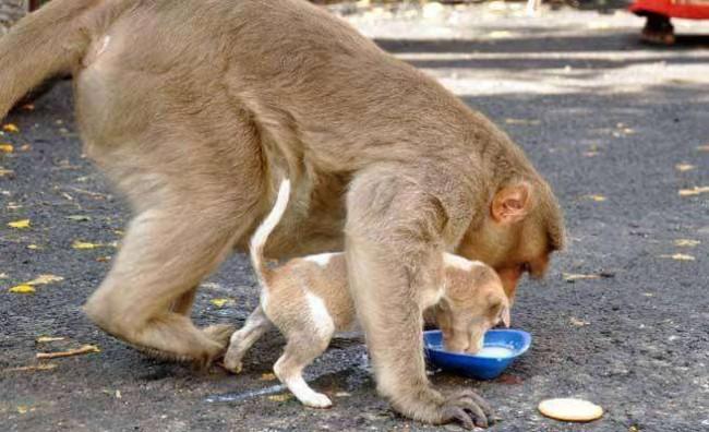 Foto: The Logical Indian / Facebook