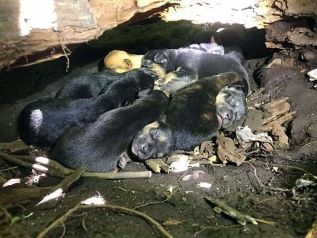 Foto: Reprodução / Stray Rescue of St. Louis