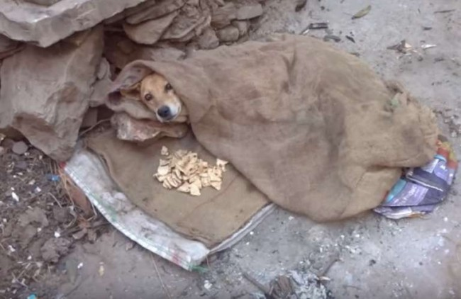 Foto: Reprodução / ONG Animal Aid