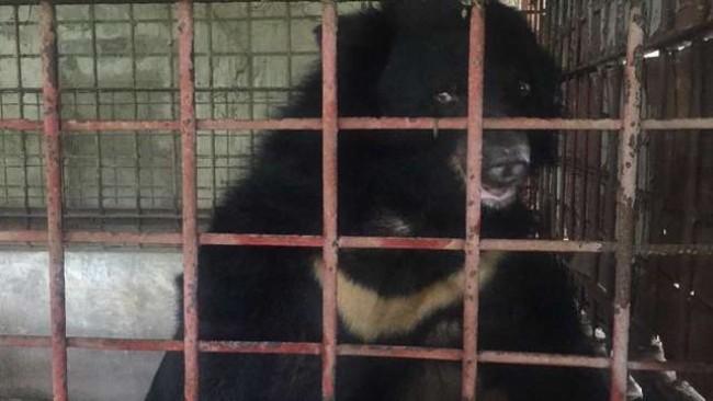 Foto: Reprodução / Animals Asia