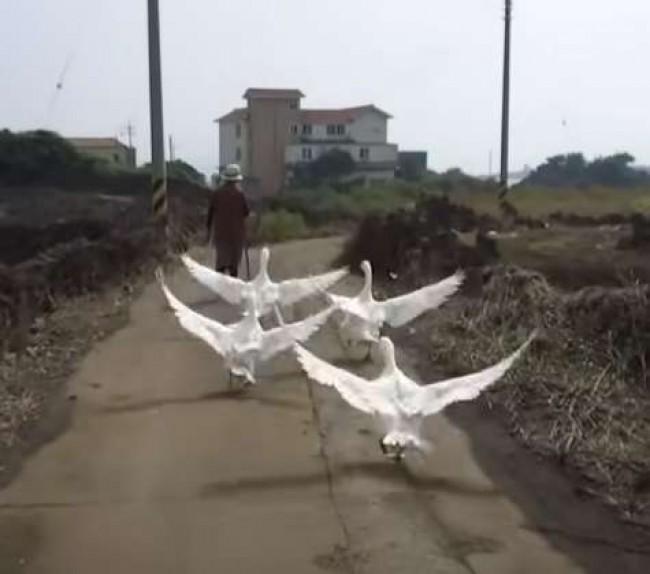 Foto: Reprodução Youtube /  SBS TV (China)