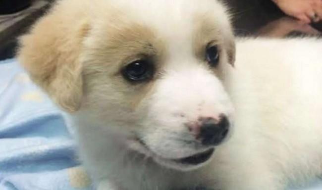 Foto: Facebook / The Dog Rescuers