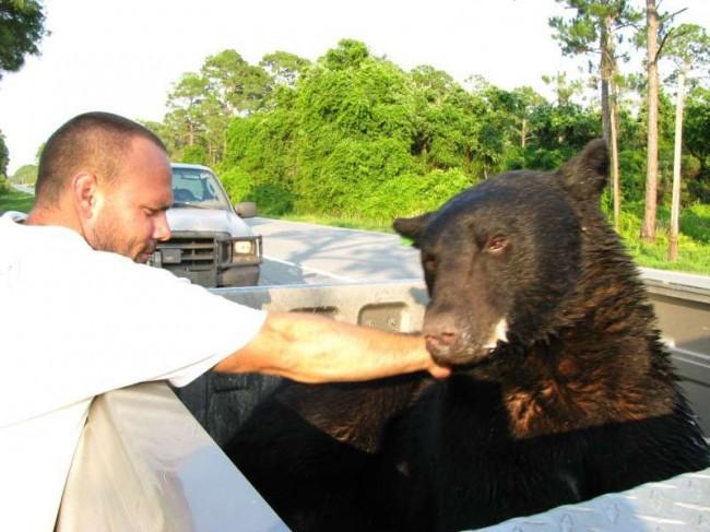 Foto: Reprodução Youtube/Protect All Wildlife