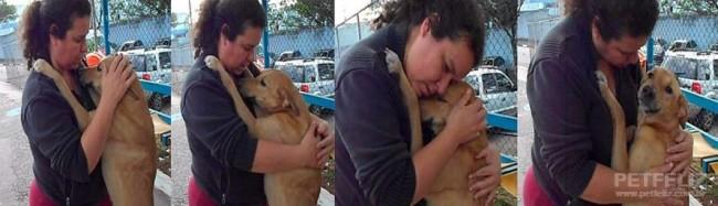 Foto: Reprodução/Petfeliz protegendo os animais