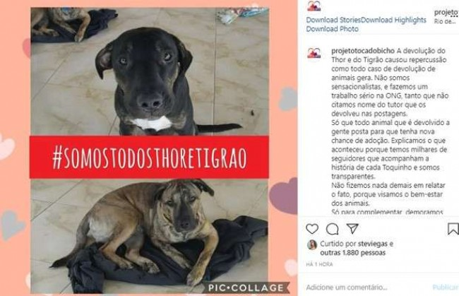 Foto: Instagram / projetotocadobicho