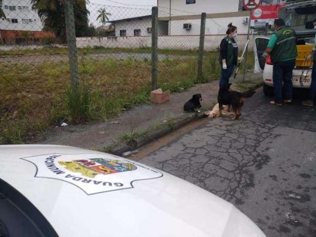 Foto: Divulgação / Guarda Municipal de Blumenau