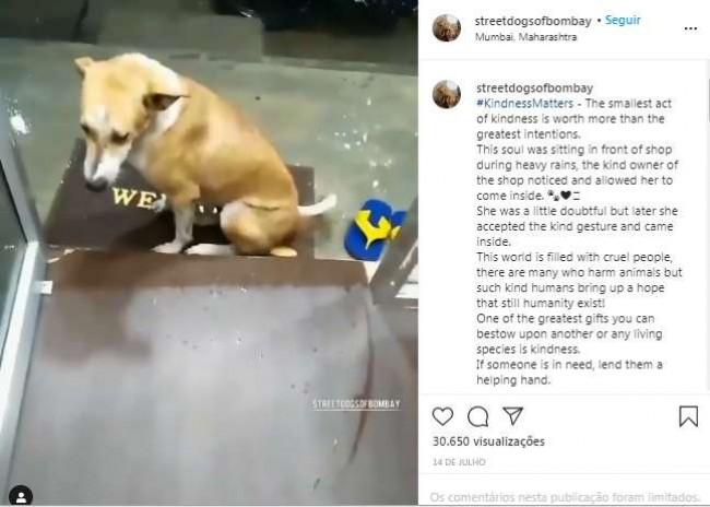 Foto: Reprodução Instagram / streetdogsofbombay