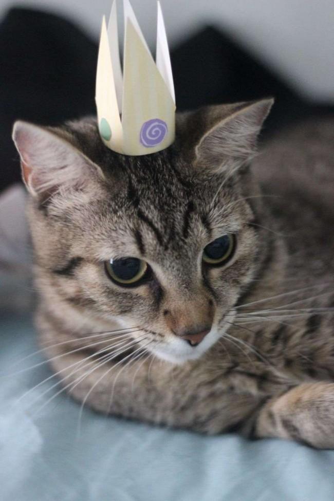 Foto: Reprodução / care-cats.org