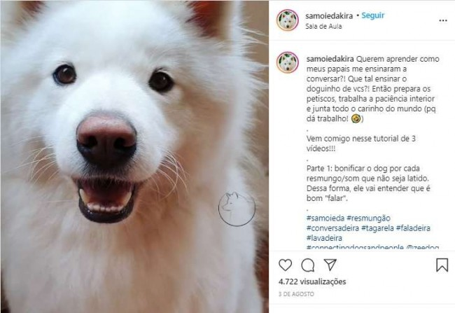 Foto: Reprodução Instagram / samoiedakira