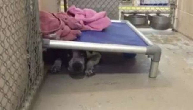Foto: Friends of Collier Domestic Animal Services