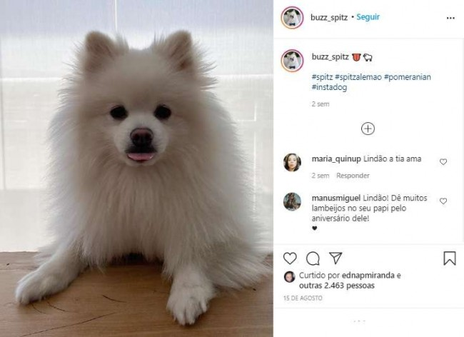 Foto: Instagram / buzz_spitz